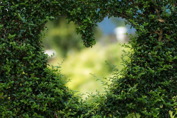 Значение руны Феху в любви и отношениях.